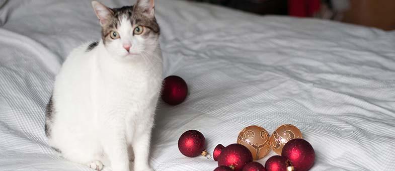 sichere-weihnachtsdeko-katze