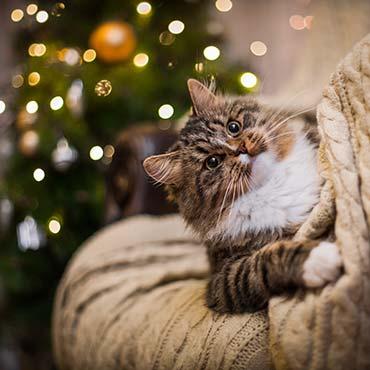 Katzensicherer weihnachtsbaum tierisch wohnen - Blinkender weihnachtsbaum ...