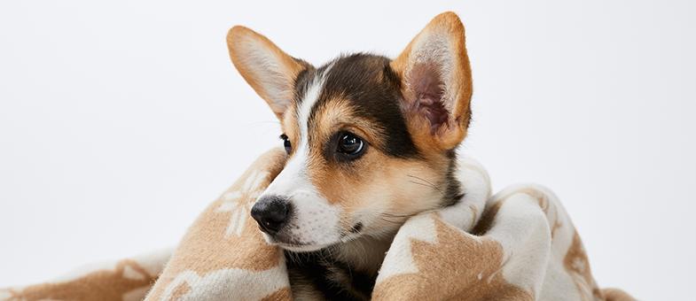 Hund ist in Decke eingewickelt