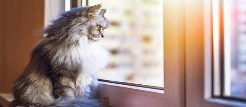 Fenster sicher fuer Katzen machen