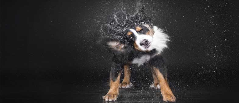 Hund Kommando Schütteln vor der Tür beibringen