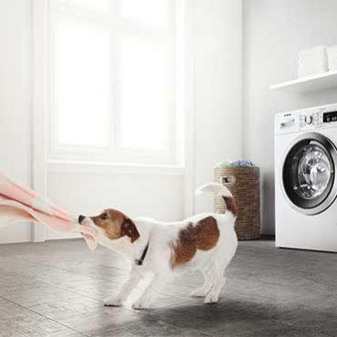 Hunde, Baby und Hygiene