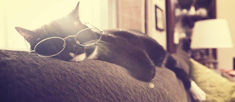 Lustige Schlafpositionen bei Katzen