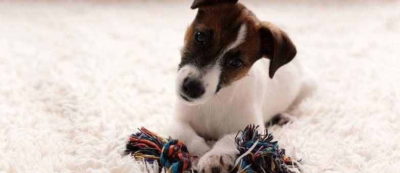 Suchspiel für den Hund in der Wohnung