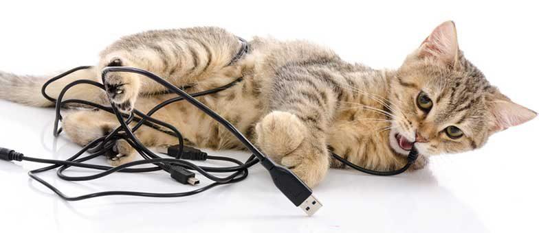 Katze knabbert am Kabel