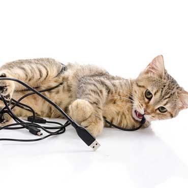 katze von kabeln fernhalten tipps tricks tierisch wohnen. Black Bedroom Furniture Sets. Home Design Ideas