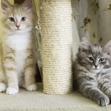 Katzen am Kratzbaum