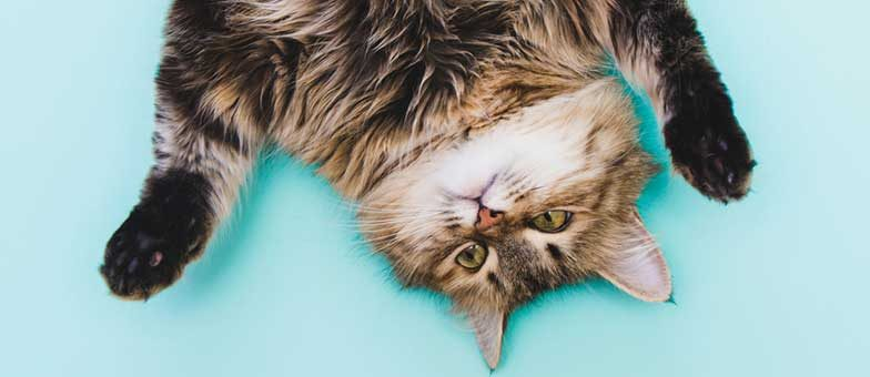 Flauschige Katzen auf Instagram