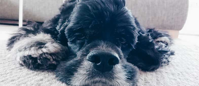 Gestresster Hund