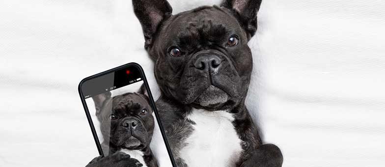 Sind die süß: Hunde auf Instagram