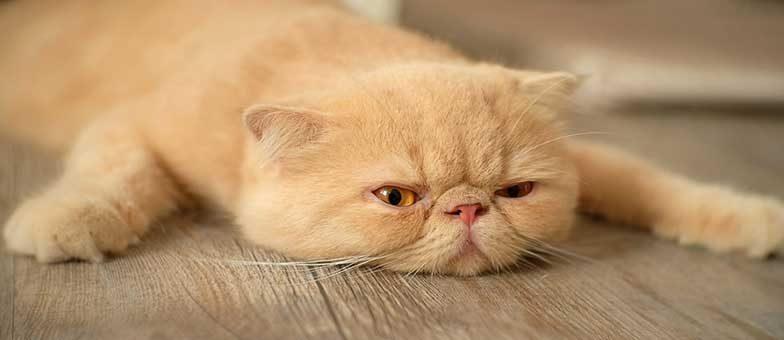 Beschäftigungsmöglichkeiten für die Katze