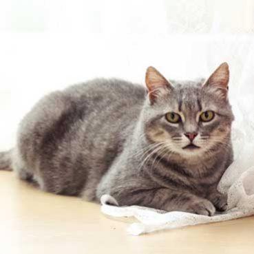 Was die Kopfstellung bei Katzen bedeutet