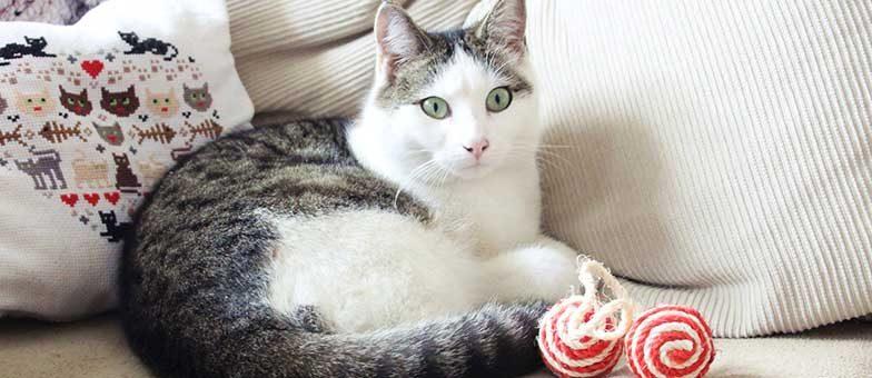 Katze anschaffen: Tipps und Tricks