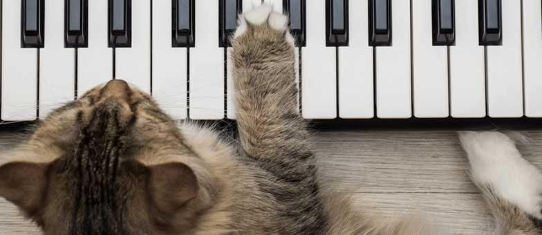 Hören Katzen Musik
