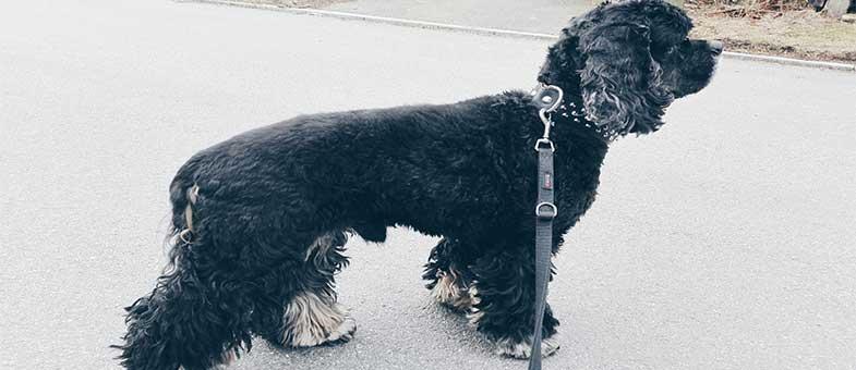 Die Bedeutung der Rutenhaltung beim Hund