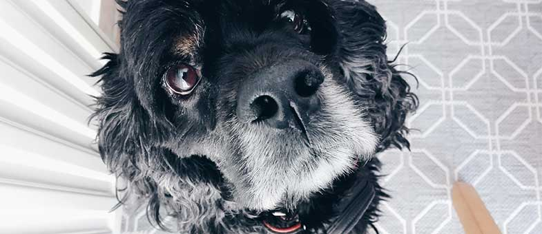 Hunde und deren Erziehung