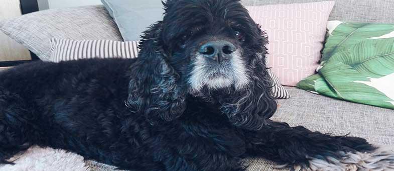Hundeerziehung und die häufigsten Irrtümer