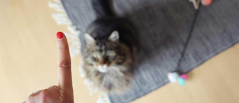 Das Sitz-Kommando für Katzen