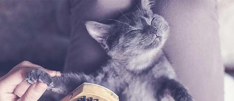 Katzen, die wenig haaren