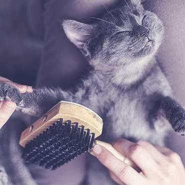 Katzen die wenig haaren