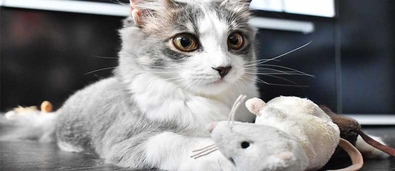 Warum bringen Katzen Mäuse nach Hause