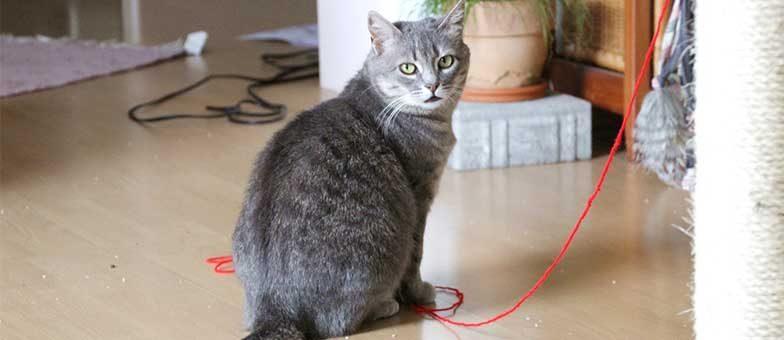 Umgang mit einer ängstlichen Katze