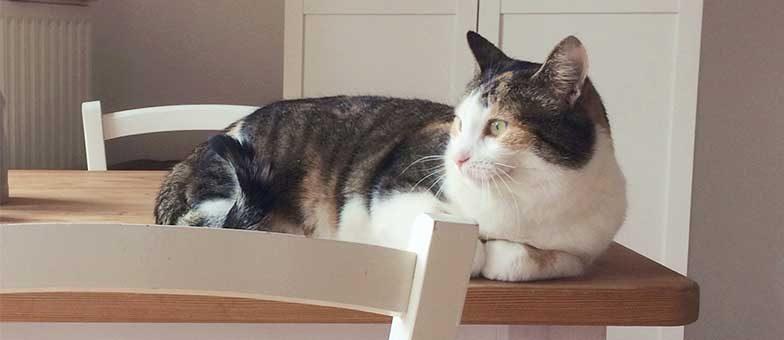 katze vom esstisch fernhalten tierisch wohnen. Black Bedroom Furniture Sets. Home Design Ideas