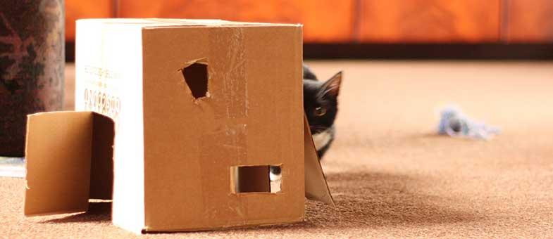 Katze spielt mit Karton
