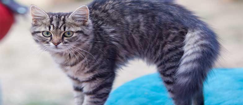 Katzenbuckel verstehen