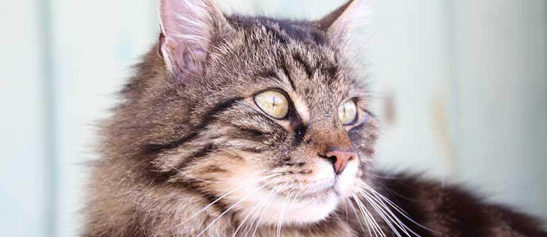 Wie alt werden Katzen eigentlich