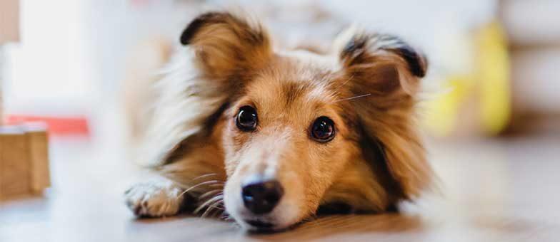 Schonkost für Hunde