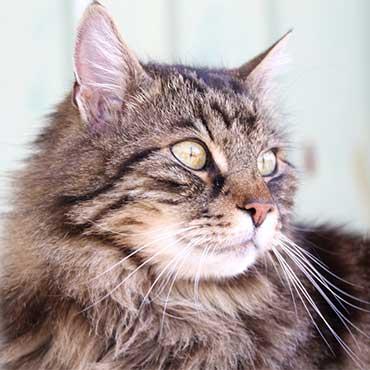 katzenjahre wie alt werden katzen tierisch wohnen. Black Bedroom Furniture Sets. Home Design Ideas