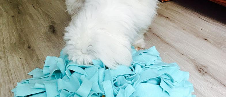 Hund Schnüffelteppich