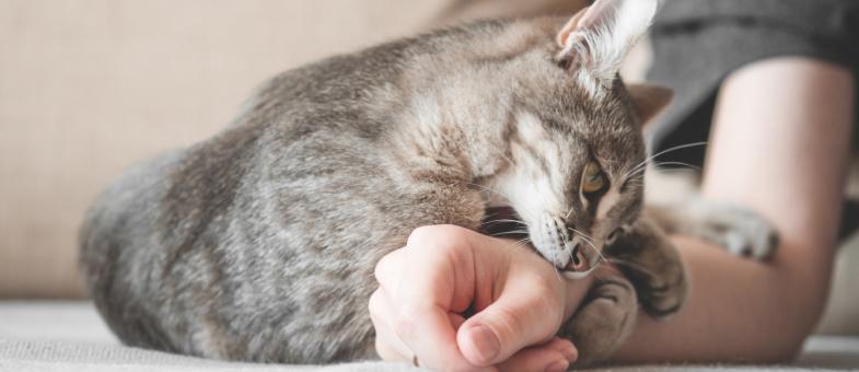 Katze das Kratzen abgewöhnen