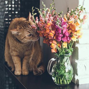 welche pflanzen sind f r katzen giftig tierisch wohnen. Black Bedroom Furniture Sets. Home Design Ideas