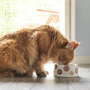 gutes Katzenfutter erkennen