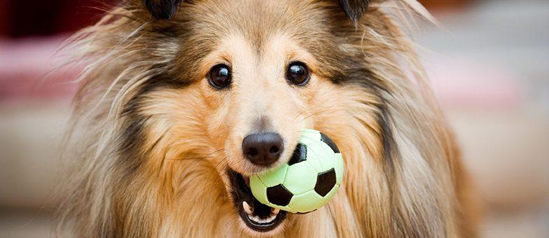 intelligentes Hundespielzeug