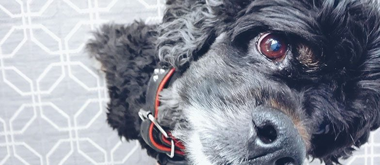 Für einen harmonischen Umgang von Kind und Hund sind einige Verhaltensregeln wichtig.