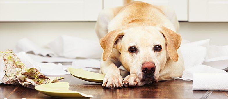 Mietschäden durch den Hund