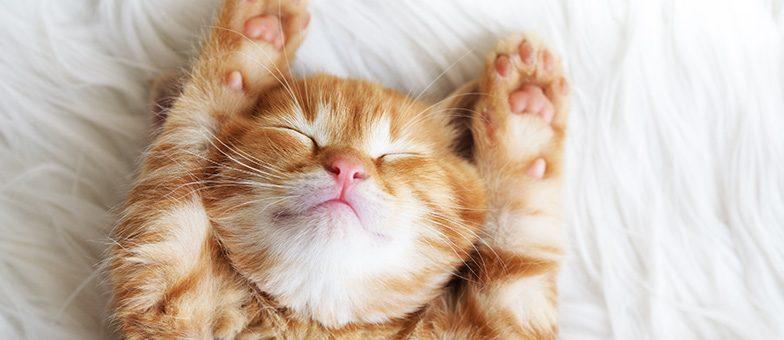 Wie du Stress bei Katzen reduzieren kannst