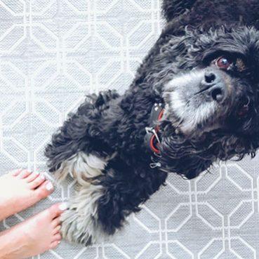 Der Umgang von Kind und Hund klappt am besten mit ein paar Tipps und Regeln.