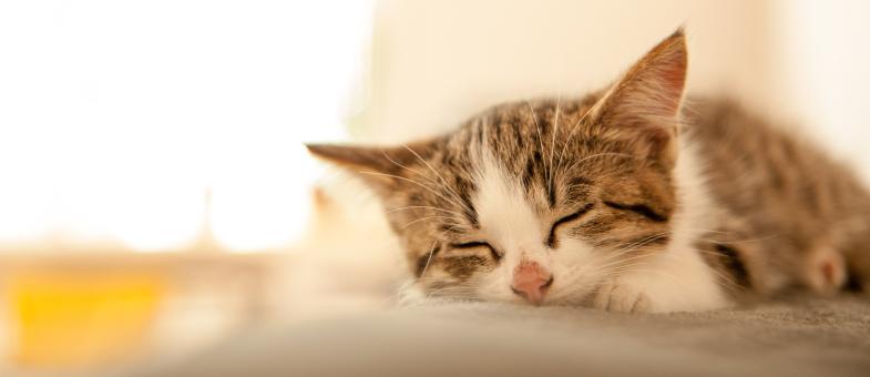 Katze schläft