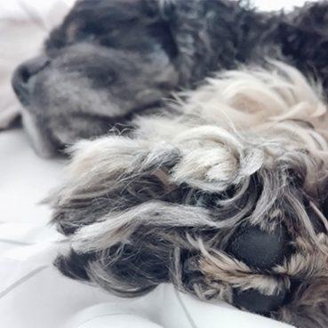 Wie viel Schlaf benötigt ein Hund