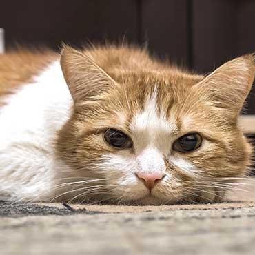Depressionen Bei Katzen Erkennen Tierisch Wohnen