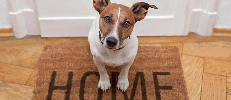 Gefahren mit Hunden in der Wohnung