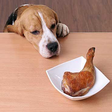 Grillreste und Hund
