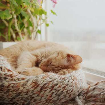 Wie viel Schlaf brauchen Katzen?