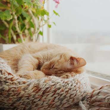 wie viel schlaf brauchen katzen tierisch wohnen. Black Bedroom Furniture Sets. Home Design Ideas