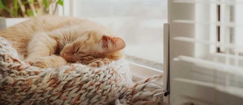 Wie lange schlafen Katzen?