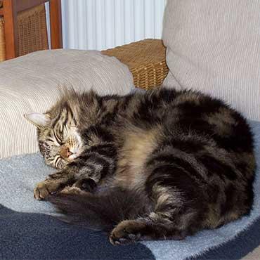 zecken von katzen fernhalten tierisch wohnen. Black Bedroom Furniture Sets. Home Design Ideas